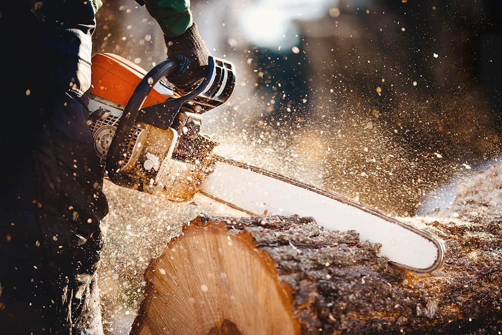 Cutting a felled tree into sections near a house