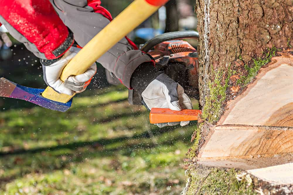 Drive in felling wedges to cut down a leaning tree