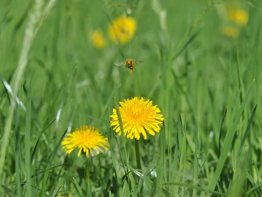 Herbicides safe for bees