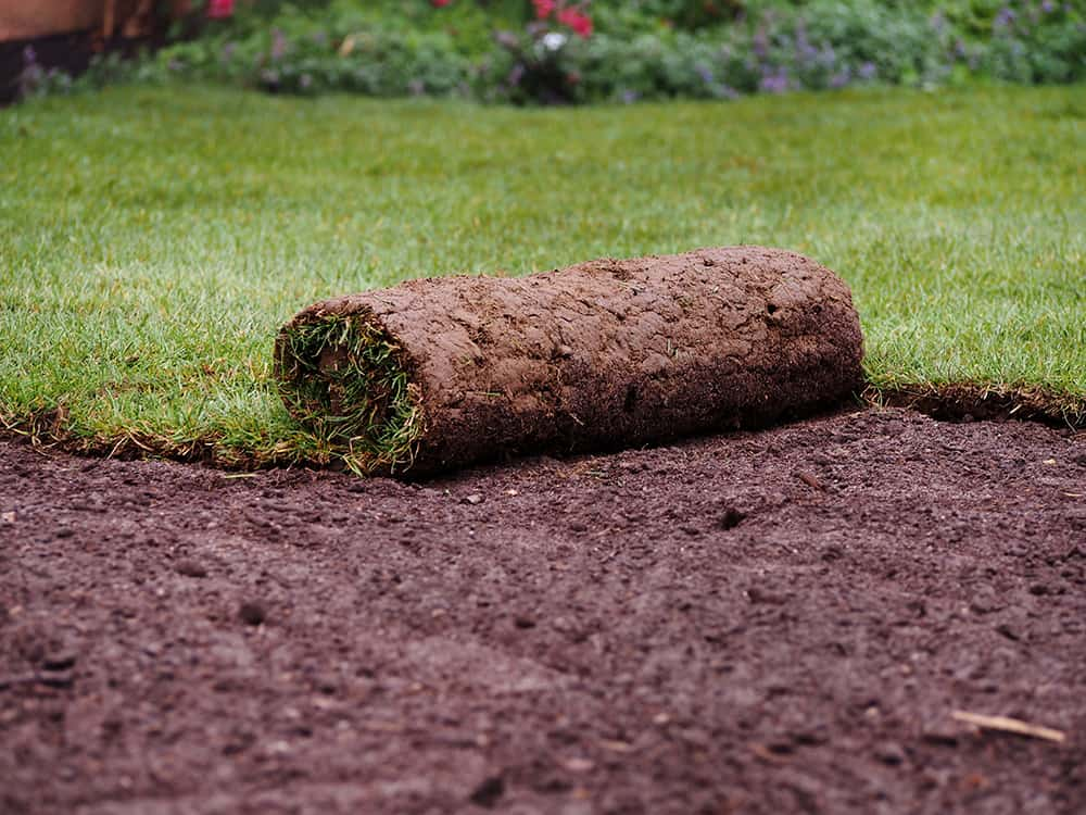 How long to sod after pre-emergent