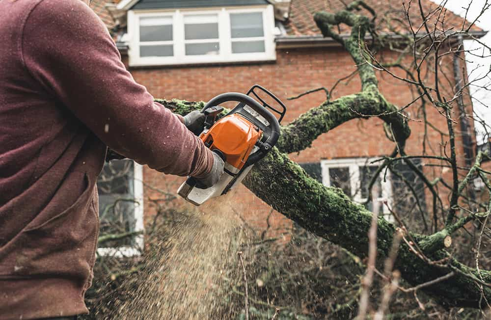 How to cut down a large tree near a house