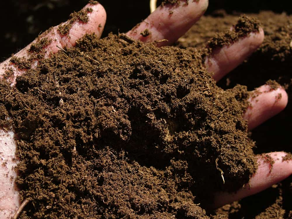 Is peat moss good for grass?