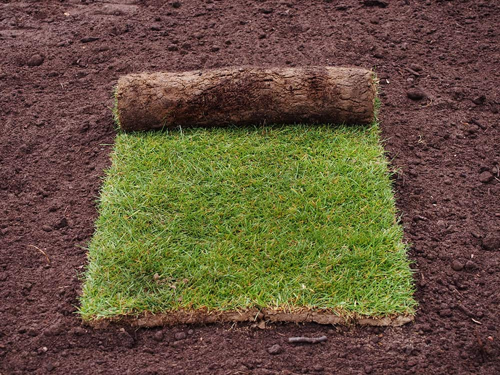 negatives of laying sod after pre-emergent