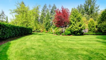 Mixing Kentucky Bluegrass with Tall Fescue