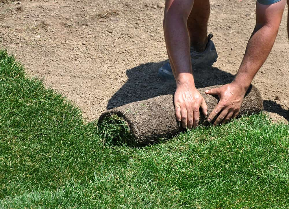 Steps to laying sod in Texas