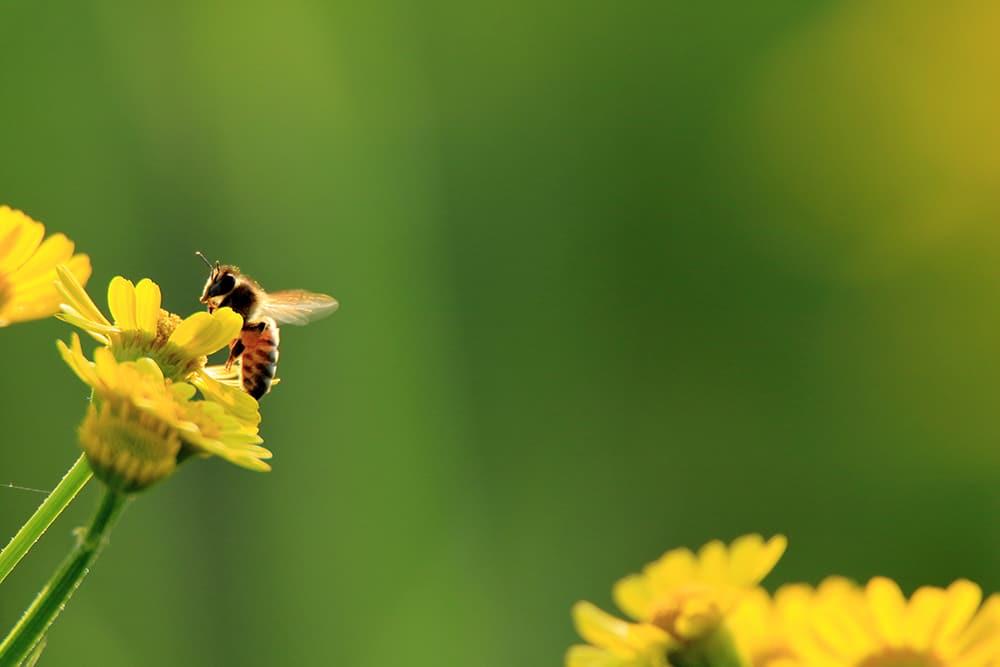 Weed killer safe for bees