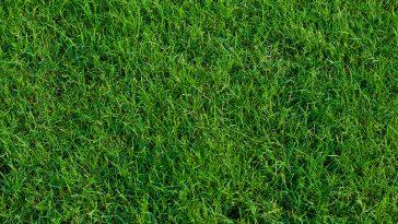 Will Bermuda grass choke out weeds?