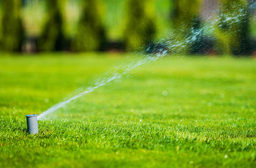 Best time to water Bermuda grass