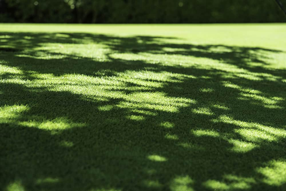 Does St. Augustine grass grow in shade?