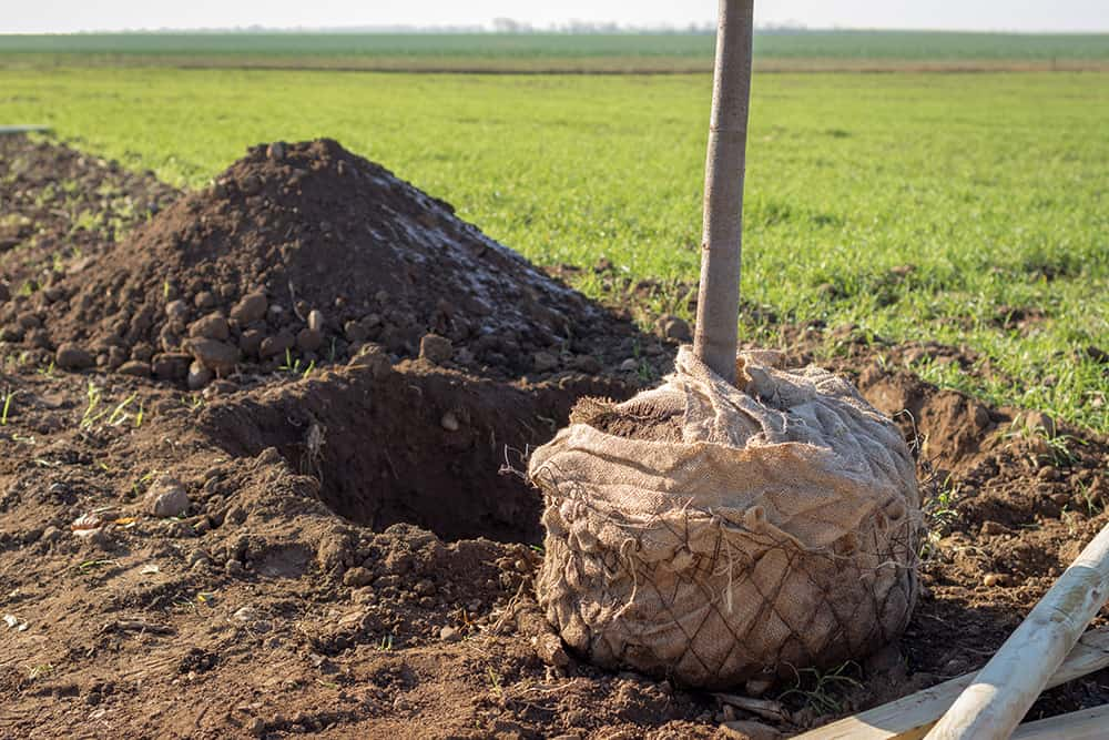 Easiest way to dig a hole for a tree