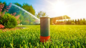 How much to water Bermuda grass
