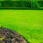 How to add nitrogen to soil without fertilizer