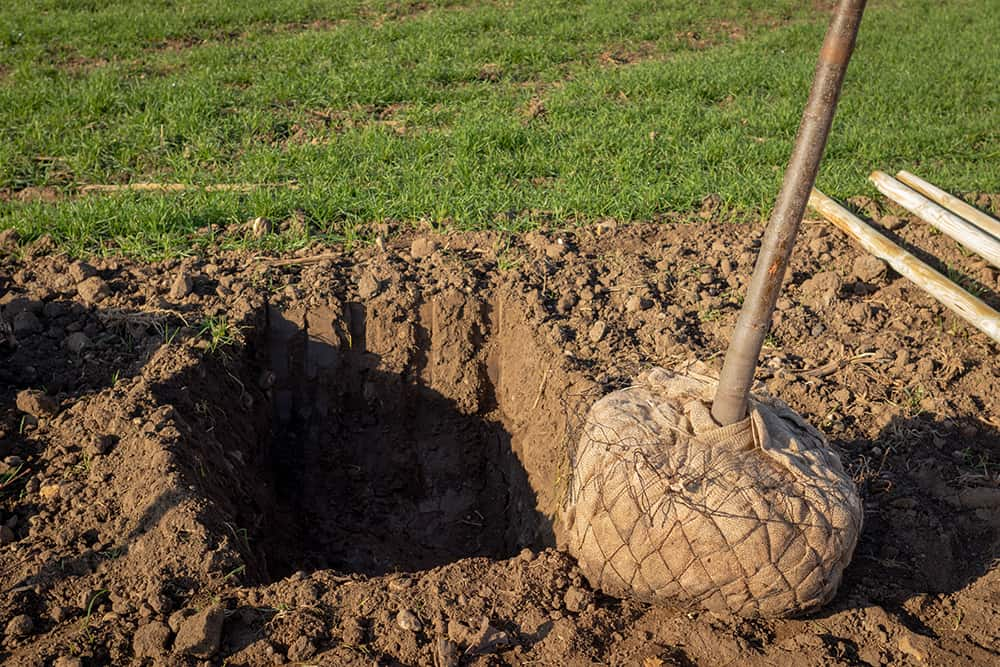 How to dig a hole for a tree