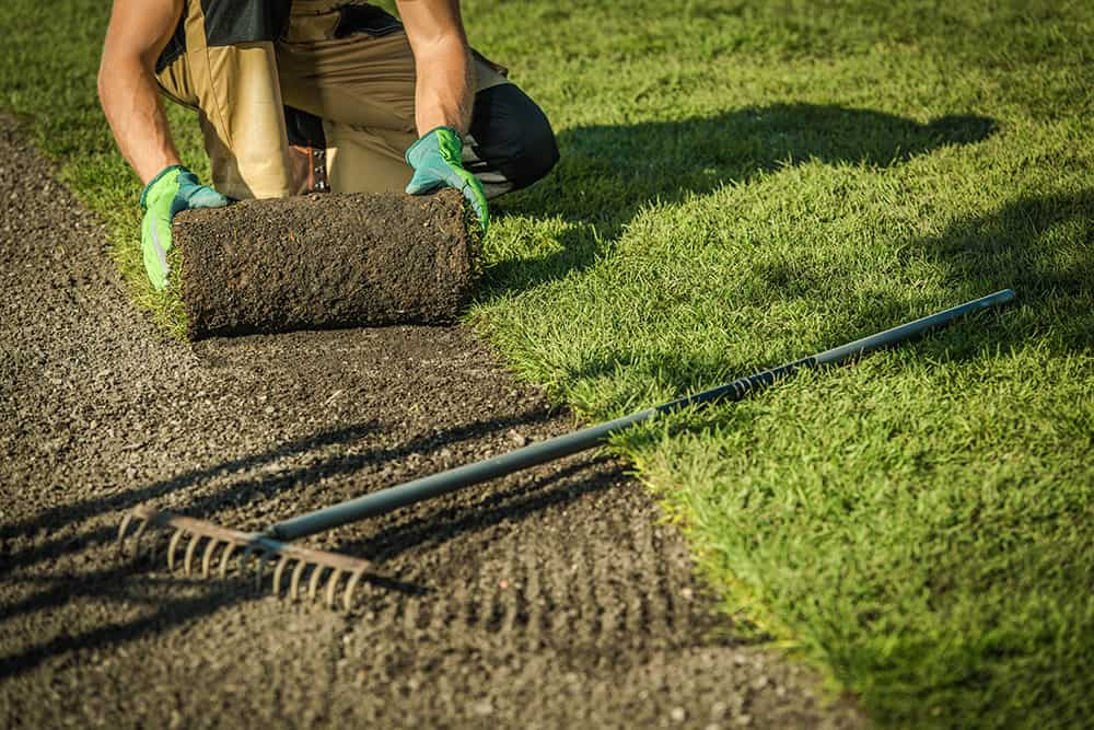 Laying sod without tilling