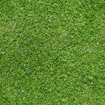 When does Bermuda grass turn green?