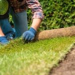 When is it too late to lay sod?