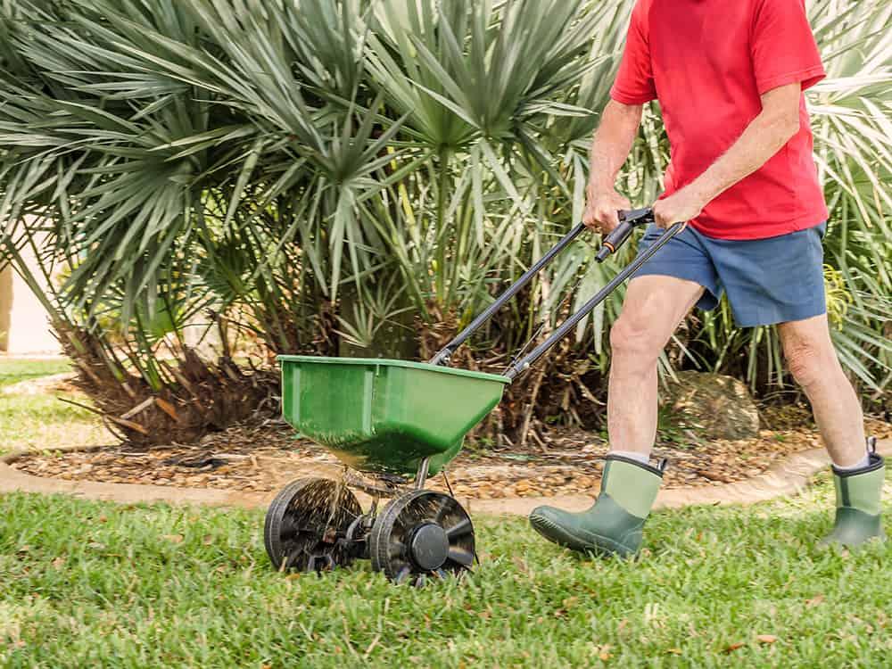 15-0-15 fertilizer for centipede grass