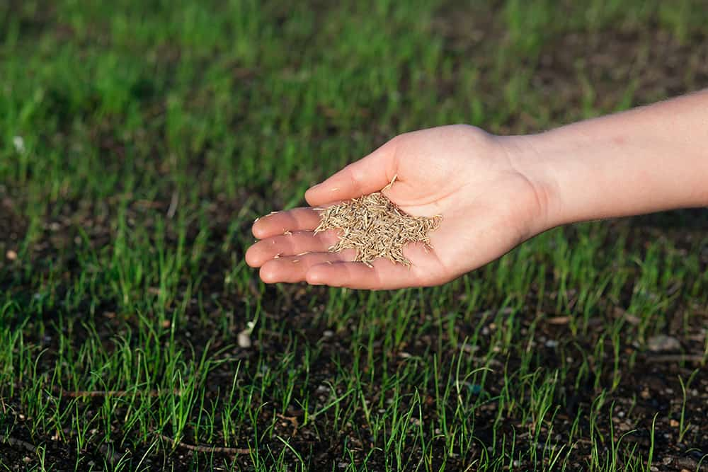 Compost or topsoil for overseeding?