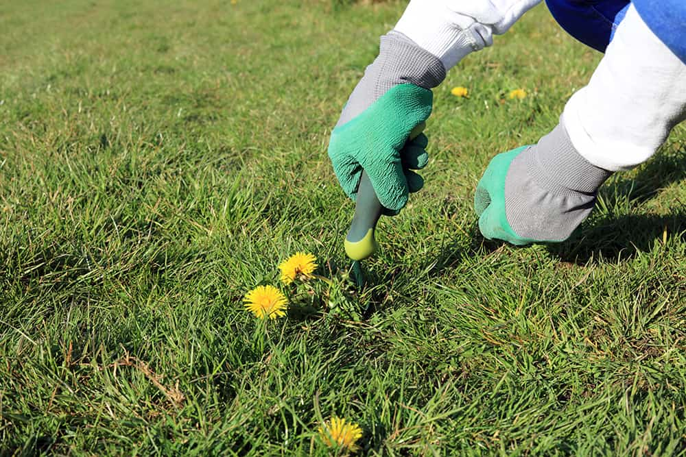 Digging up weeds permanently
