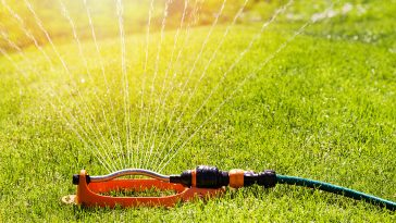 How much water does Kentucky Bluegrass need?