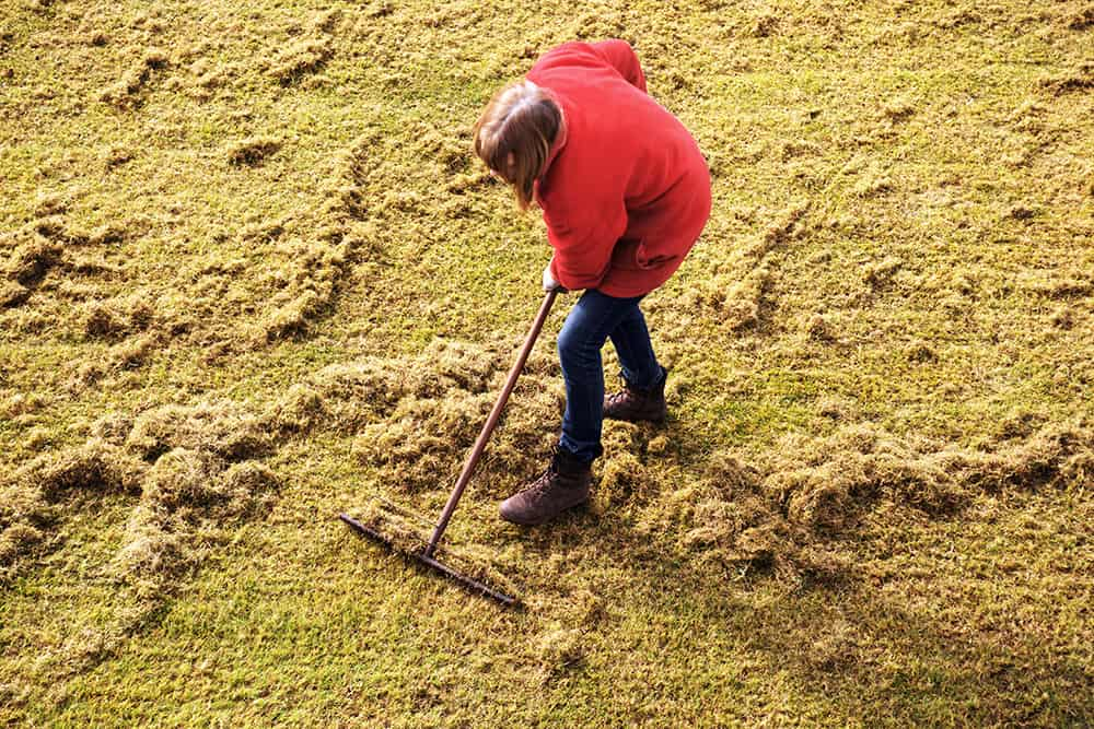 How to dethatch a lawn with a rake
