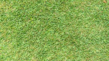 How to dethatch St. Augustine grass