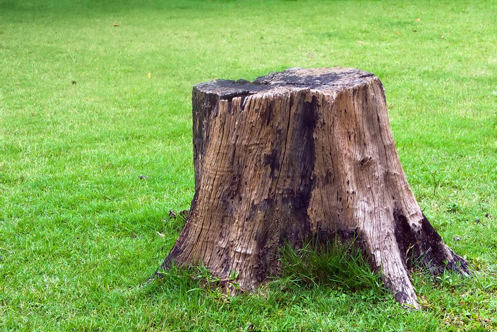 How to get rid of tree roots after you cut the tree?