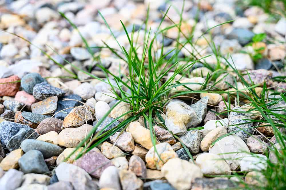 How to get rid of weeds in rock landscaping