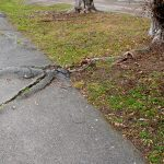 How to stop tree roots from growing under house