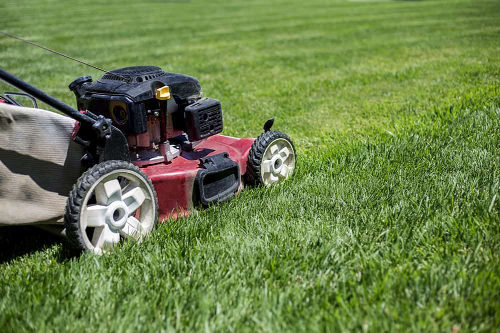 Mow your lawn shorter than usually when preparing to add compost for overseeding