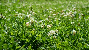 Natria vs Roundup
