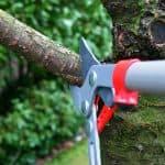 Sealing tree limbs after cutting