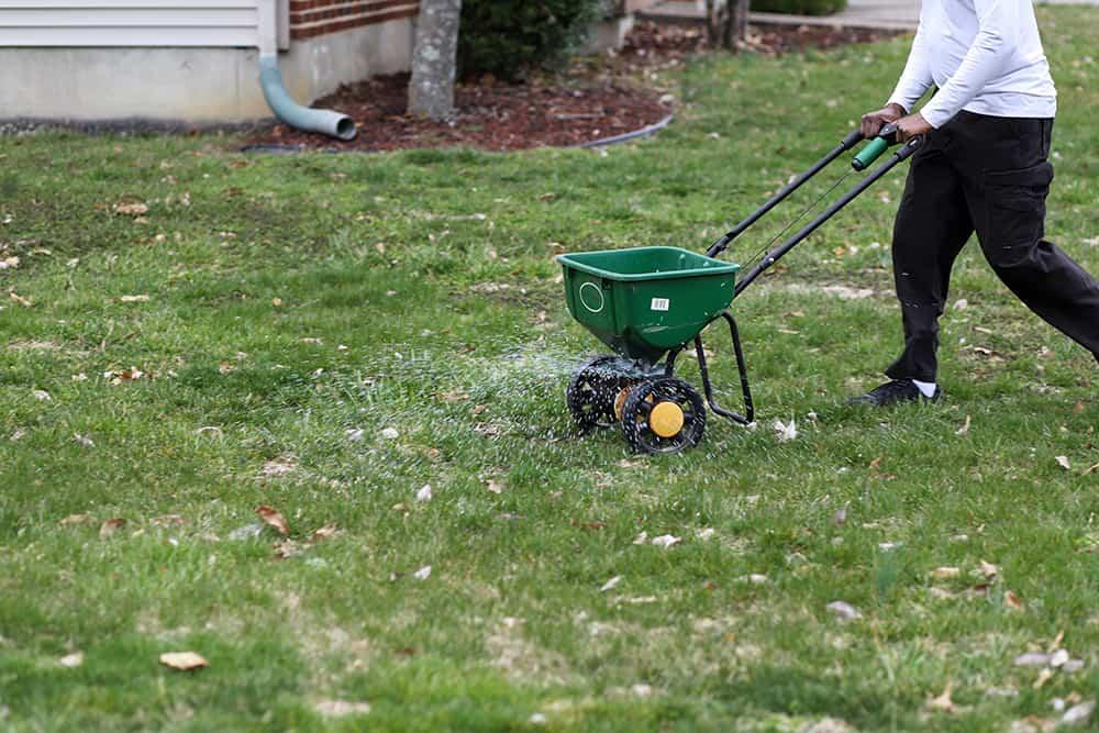 When to fertilize Kentucky Bluegrass