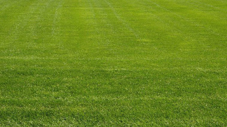 Will crossbow kill grass?