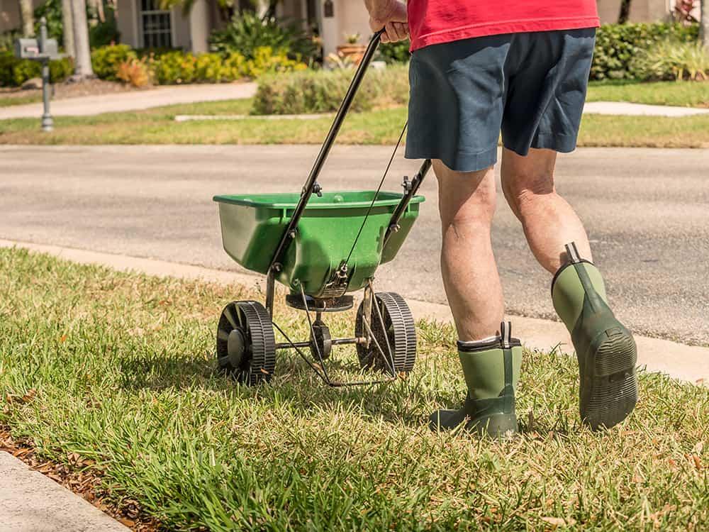 Best winter fertilizer for St. Augustine grass