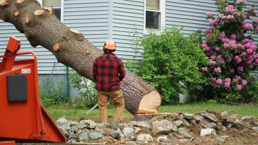 Can removing a tree cause foundation problems?