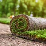 Can you lay sod in the fall?