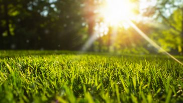 Can you use fungicide and fertilizer at the same time?