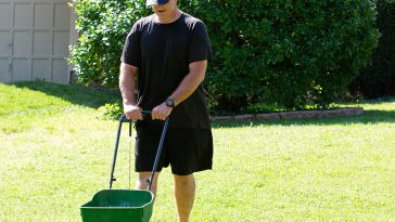 Fertilizer for St. Augustine grass in fall