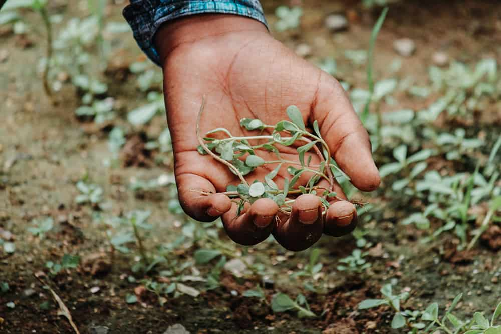How to get rid of weed seeds in soil
