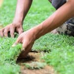 How to remove old grass and lay new sod