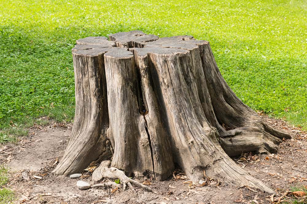 How to use Spectracide Stump Remover