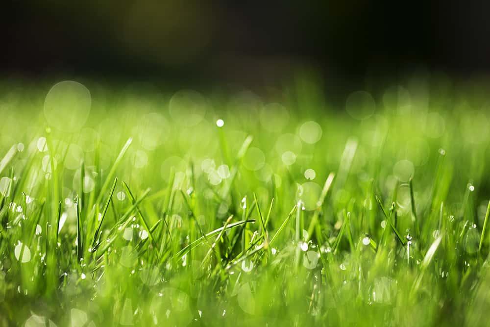 Milorganite before rain