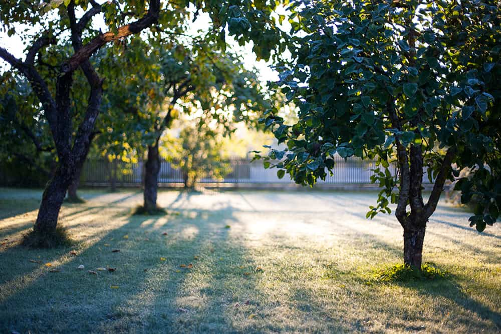 Why you should mow grass before winter