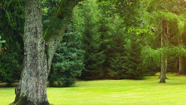 Will bleach kill a tree?