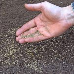 Will grass seed germinate on top of soil?