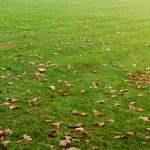 How to mulch leaves without a mower