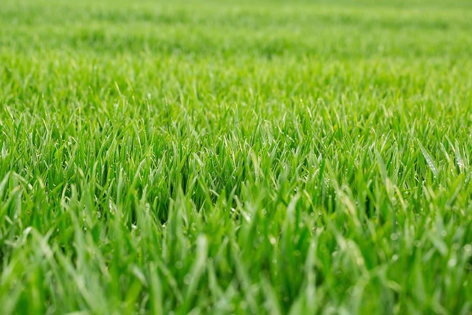 What is the best NPK for lawn fertilizer?