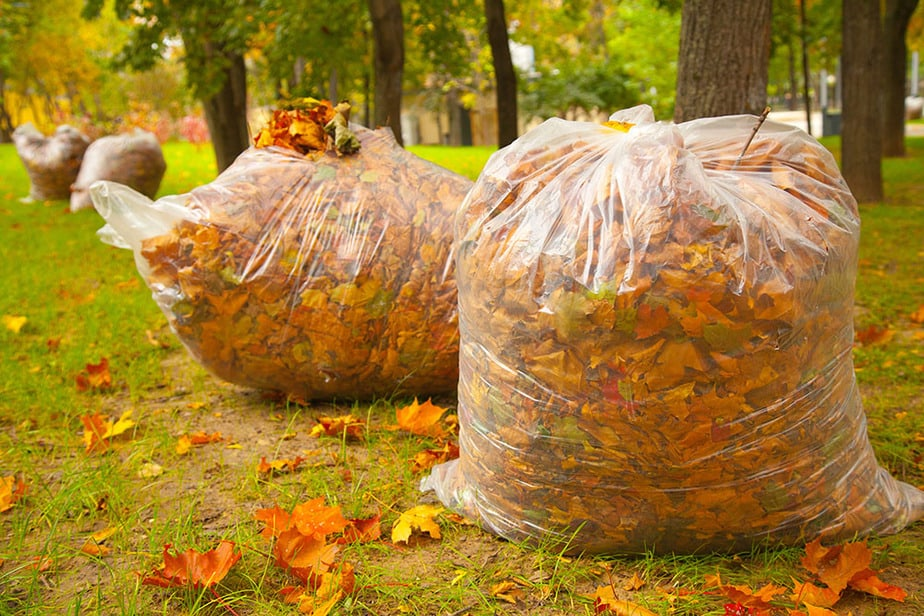Fall leaves raked into bags