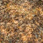 How to clean leaves from rocks